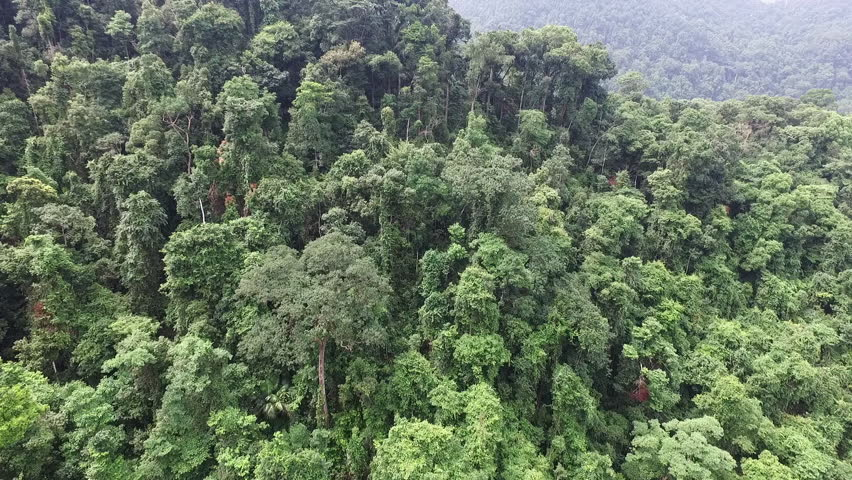 Aerial video above tropical forest in a sunny day | Shutterstock HD Video #17533495