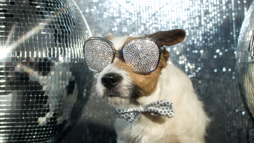 Cute jack russell dog with crystal covered sunglasses in a disco setting | Shutterstock HD Video #17565994