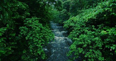 River flows through tropical rain forest jungle in Maui, Hawaii