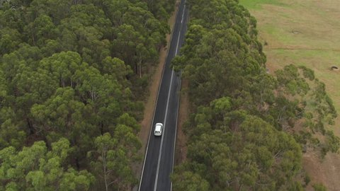 AERIAL, MOVING FORWARD: White SUV car driving along straight highway road in the middle of beautiful green lush eucalyptus tree forest and vast green meadow field with hay bales lying along the road