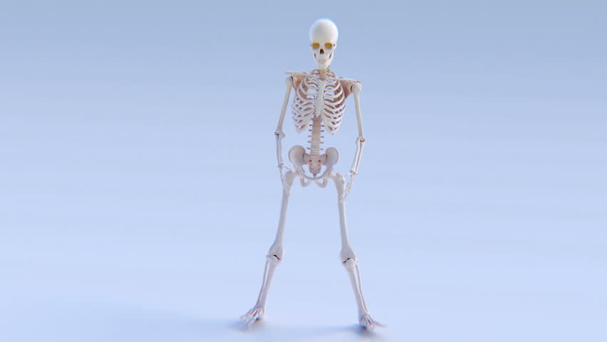 boxing skeleton: animation of a human skeleton boxing. stock, Skeleton