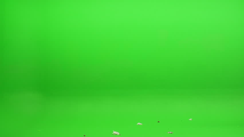 Green screen shot. Foreground element of trash, leaves, a plastic bag and other various debris blowing in the wind. Shot at 240 fps.