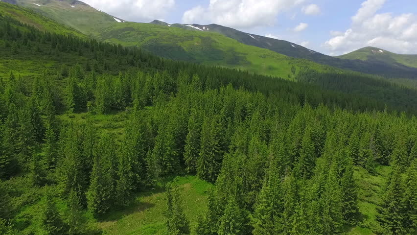 a wonderful flight to the beautiful forest in the mountains of Ukraine - HD stock footage clip
