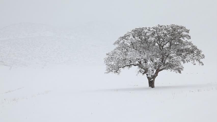 Alone tree in blizzard