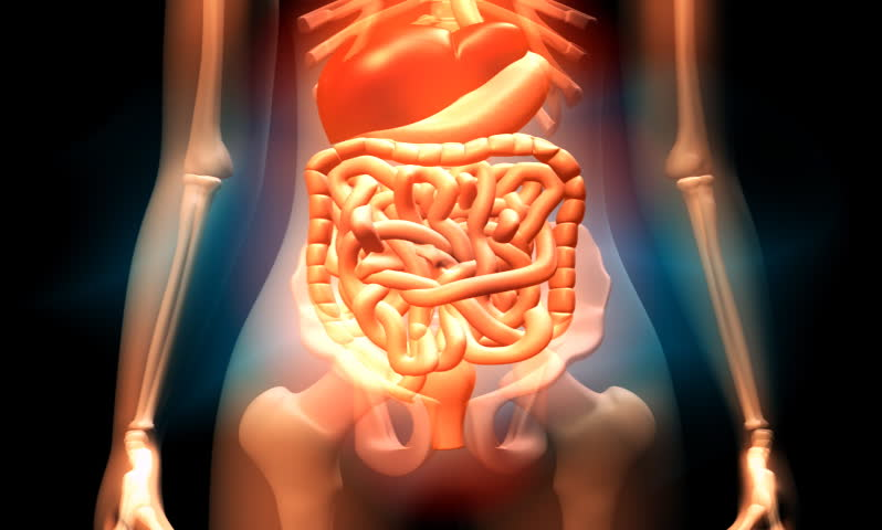 footage of a female human digestive system