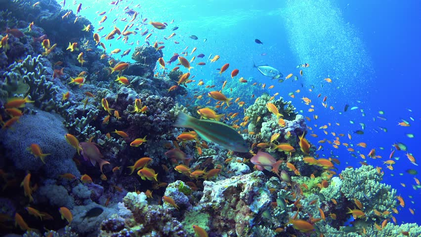 Tropical Fish on Vibrant Coral Reef, underwater static scene | Shutterstock HD Video #17974405