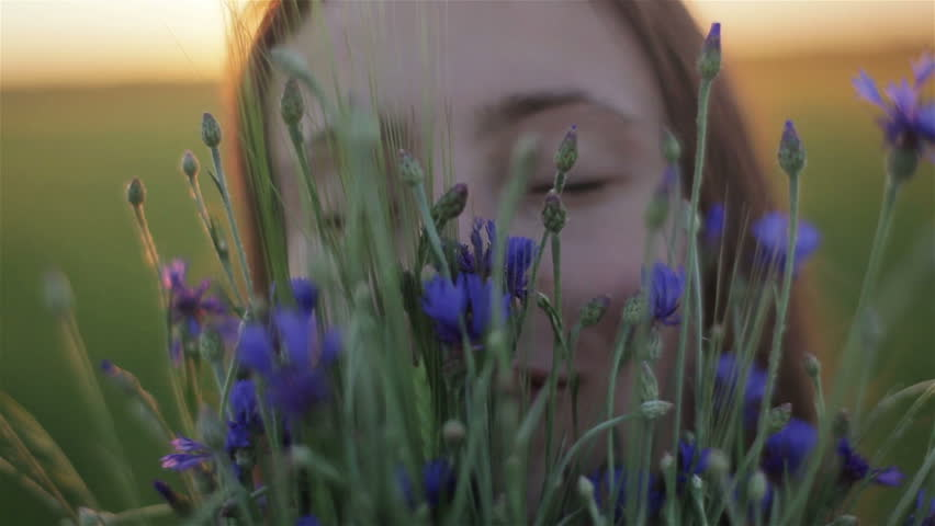 Young woman smelling flowers in bouquet picked in field. Inhaling fragrance of wild flowers enjoying smell. Girl face macro close up portrait with bouquet of centaurea sunset backlit in countryside