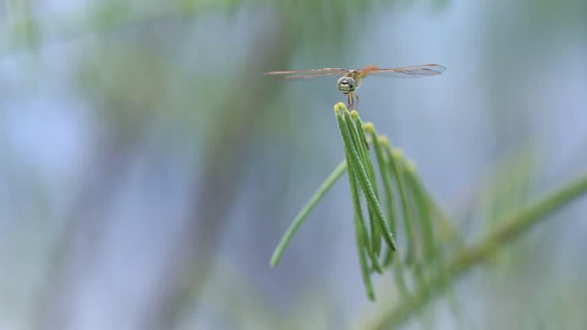 Dragonfly Island leaves. , evening | Shutterstock HD Video #18134635