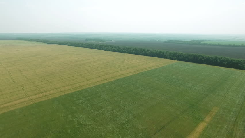 Field of green rye and golden wheat swaying in the wind.Drone flying forward. Agriculture industry scene. Summer season time. 4K Aerial stock footage clip | Shutterstock HD Video #18164845