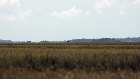 Crop duster in field in Mississippi Delta. Wide angle, plane silhouetted in background across field. Three shots.