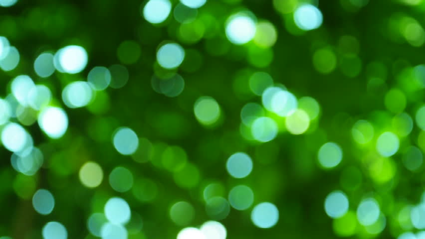 Green Bokeh In The Forest Stock Footage Video 100
