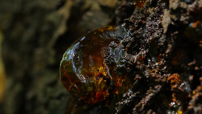 Dark cherry resin macro close up view