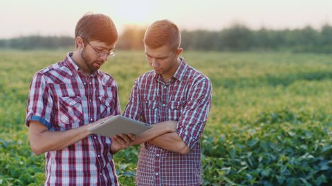 Two young farmer talk about work are in the field at sunset. Hold the tablet in hands