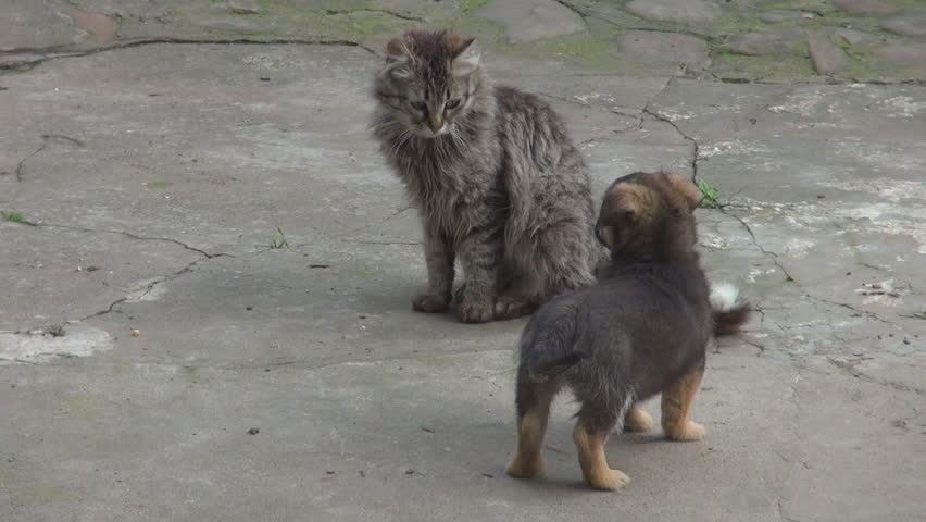 Adorable Cat And Baby Dog Play Together Friendly Fight Enjoy Life Domestic Pet