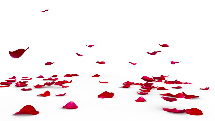The Bright Red Petals Of Stock Footage Video 100 Royalty