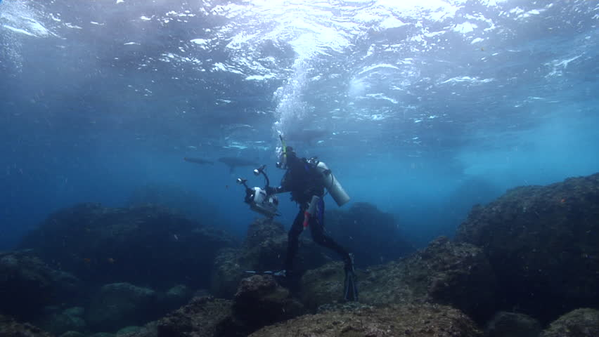 Videographer swimming on rocky reef with Galapagos fur seal in Galapagos Islands (Ecuador), HD, UP21528 | Shutterstock HD Video #18649745