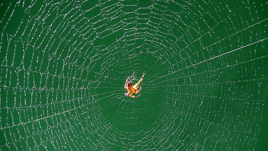 Spider on web in bright sunshine