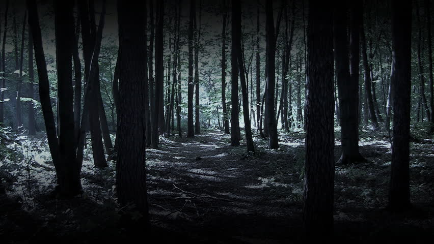 Image result for The Dark Woods