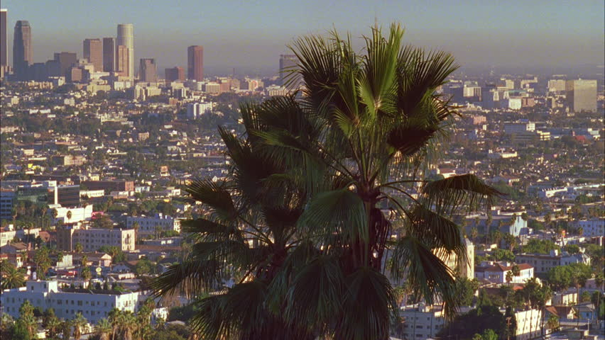Day LA Skyline, pan left houses hills Fairly smoggy day, palms foreground | Shutterstock HD Video #19071265
