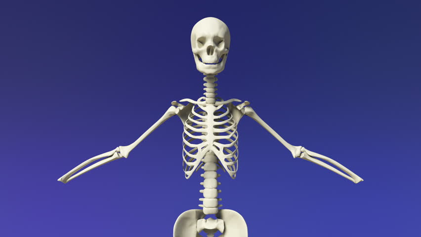stretching human skeletal stretching her upper body. stock footage, Skeleton