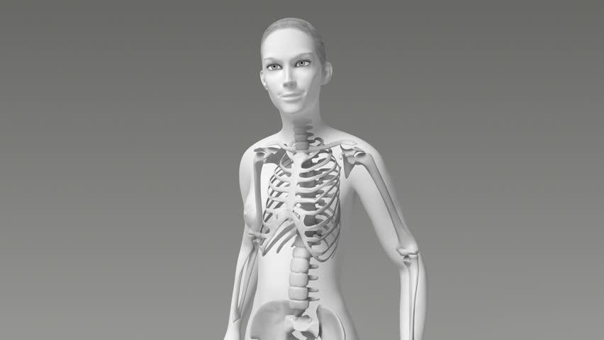 Young female anatomy