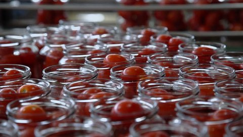 Automatic Line for Processing of Vegetables.Workers on the Production of Canned Food.Preserving Tomatoes. Glass jars with Tomatoes on a Conveyor belt