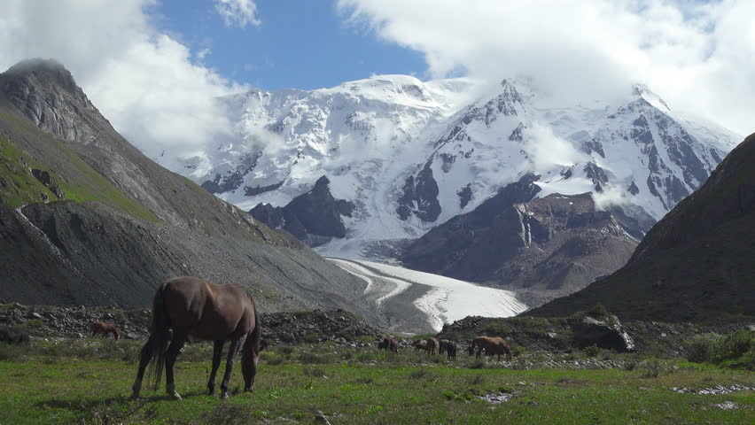 Wild horses on the snowy mountains background. Tian Shan, Kyrgyzstan