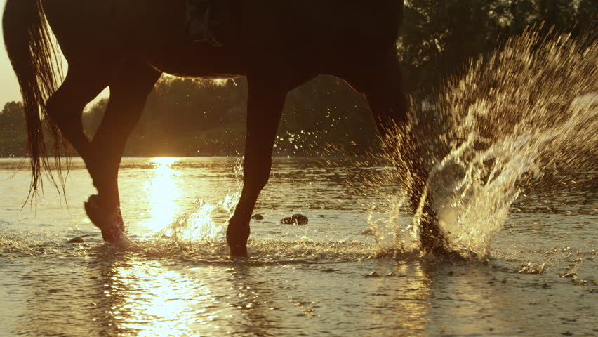 SLOW MOTION CLOSE UP: Black horse walking across a river, splashing waterdrops in magical golden light in summer evening. Dark horse walking in shallow water in rocky riverbed at beautiful sunset