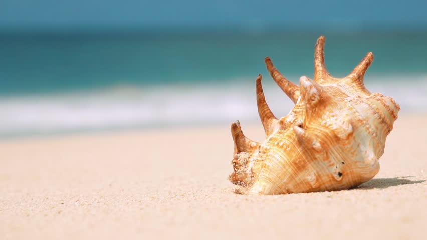 Sea Shells On The White Sand Stock Photo, Picture And Royalty Free ...