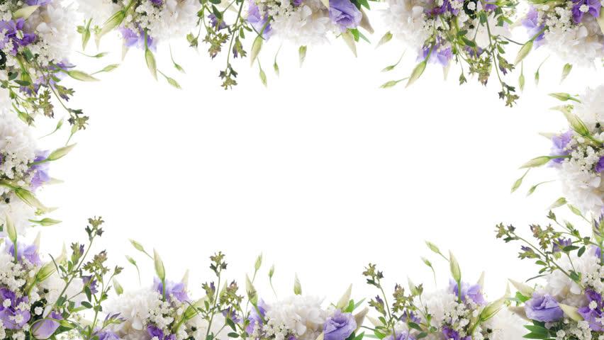 Animated Border Frame Of Purple Flowers (Daisy). Alpha ...