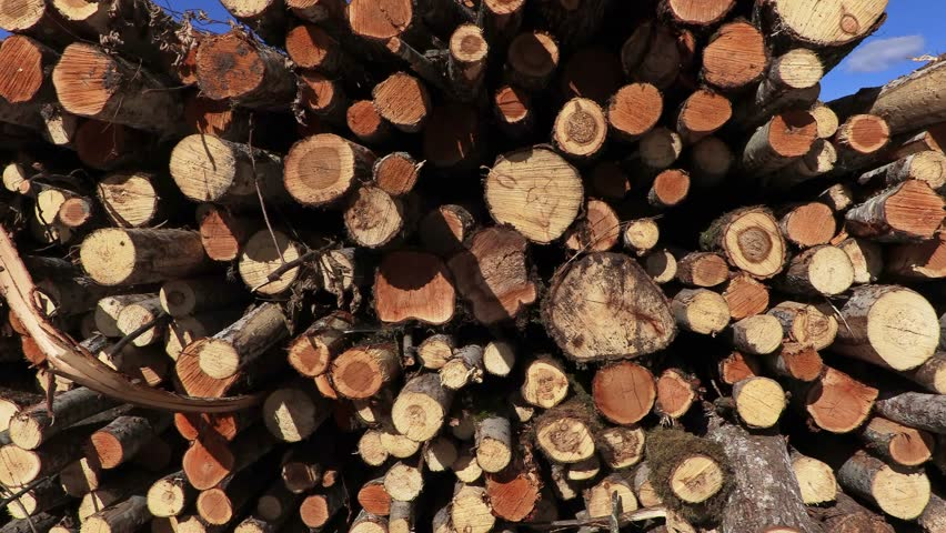 Pile of logs in forest