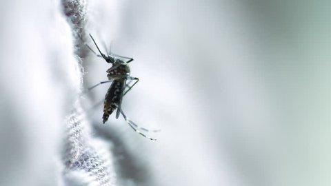 Closeup shot of Mosquito on fabric