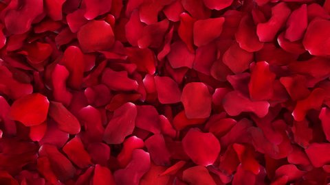 Romantic Rose Petals Wipe with Luma Matte
