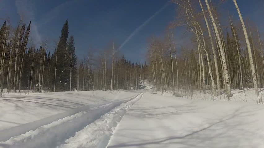 Snowmobile sled on fresh powder through high mountain pine and aspen forest during winter snow. Aspen trees and beautiful blue sky of central Utah Wasatch mountains. Part of Rocky Mountains.