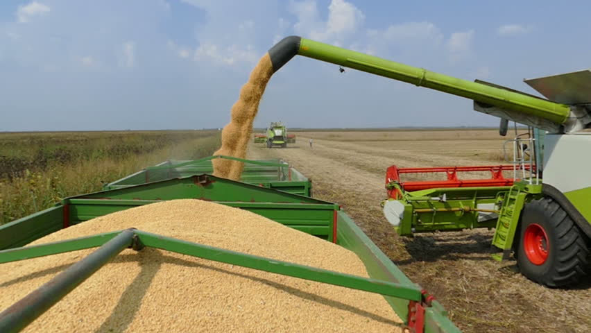 Combine harvester transferring freshly harvested soybean to tractor-trailer for transport, slow motion