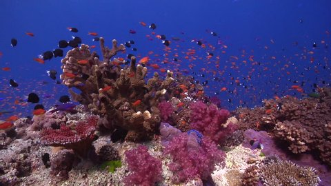 Ocean scenery on shallow coral reef, HD, UP17346