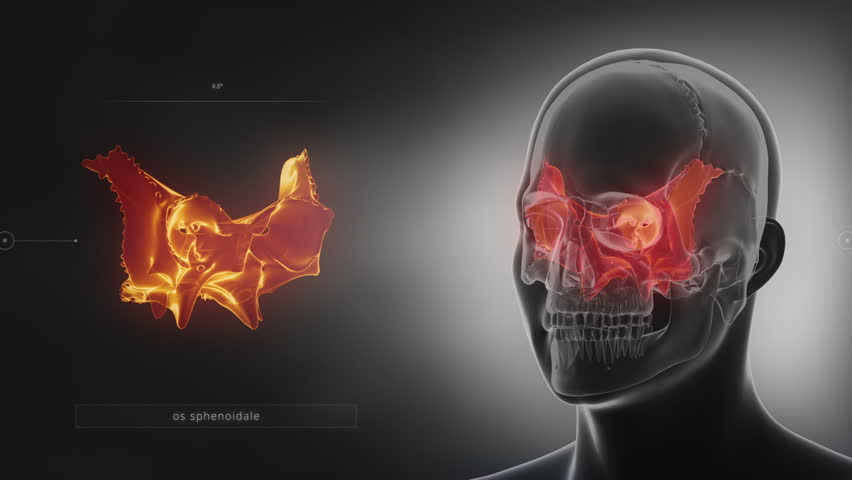 black x-ray skull animation - occipital bone - os occipitale stock, Human Body