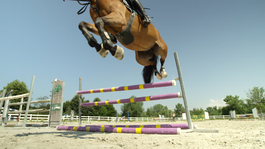 Header of showjumping