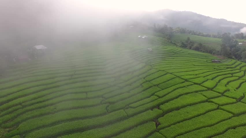 Beautiful terrace rice field from aerial view in Mae Cham, Chiang Mai, Thailand.