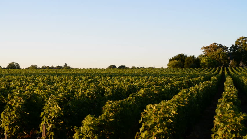 Header of Medoc