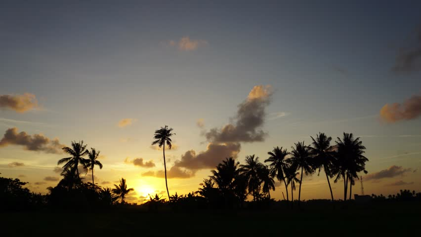 Paddy field with a row of coconut tree at sunset timelapse silhouette | Shutterstock HD Video #20140885