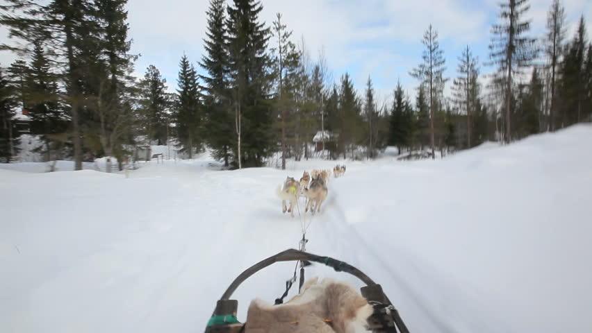 dog sledding video - 852×480