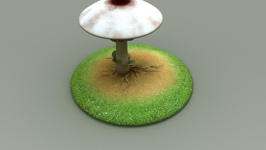 Header of mycelium