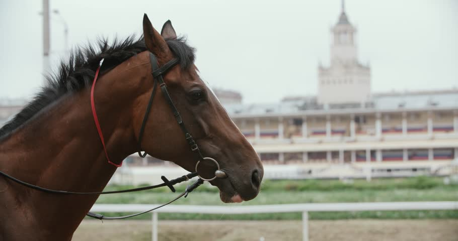 thoroughbred race horse brown close-up face in the background of a running track, slow motion #20488936