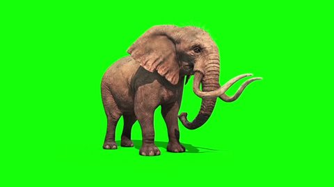 Elephant Drinks and Sprinkles Green Screen
