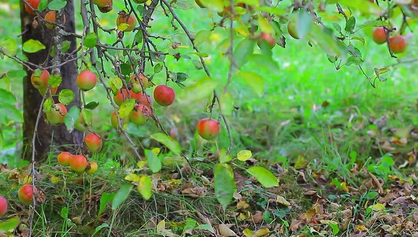 in the orchard rought draft Thinking of creating a website google sites is a free and easy way to create and share webpages.