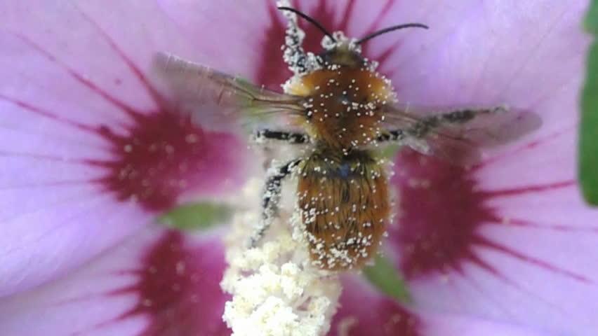 Header of bumblebee