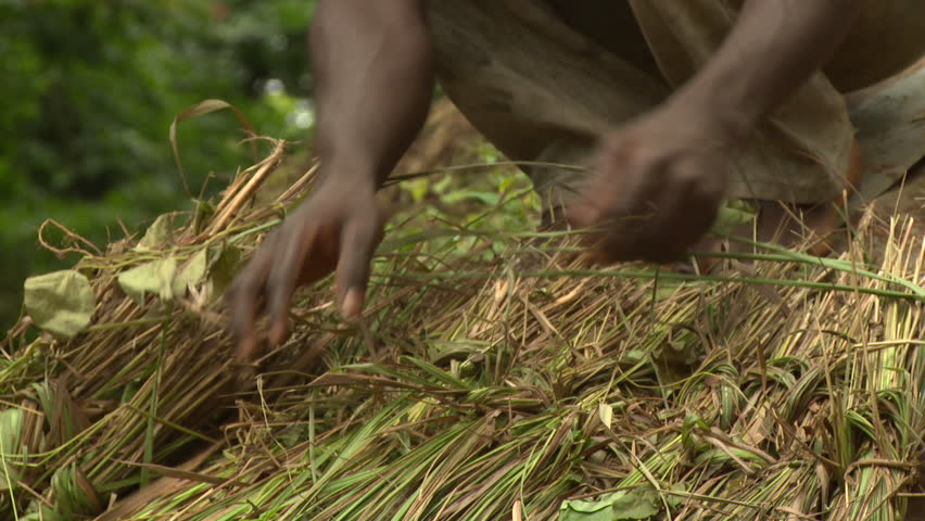 Osogbo, Nigeria - August 2013;CU putting new thatch on roof in Sacred Grove.