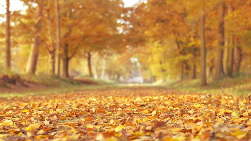 A gorgeous, colorful kiss. ::Sara   Brian&#39-s beautiful fall ...