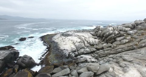 Protected Humboldt penguins on their island habitat, Chile, south America.